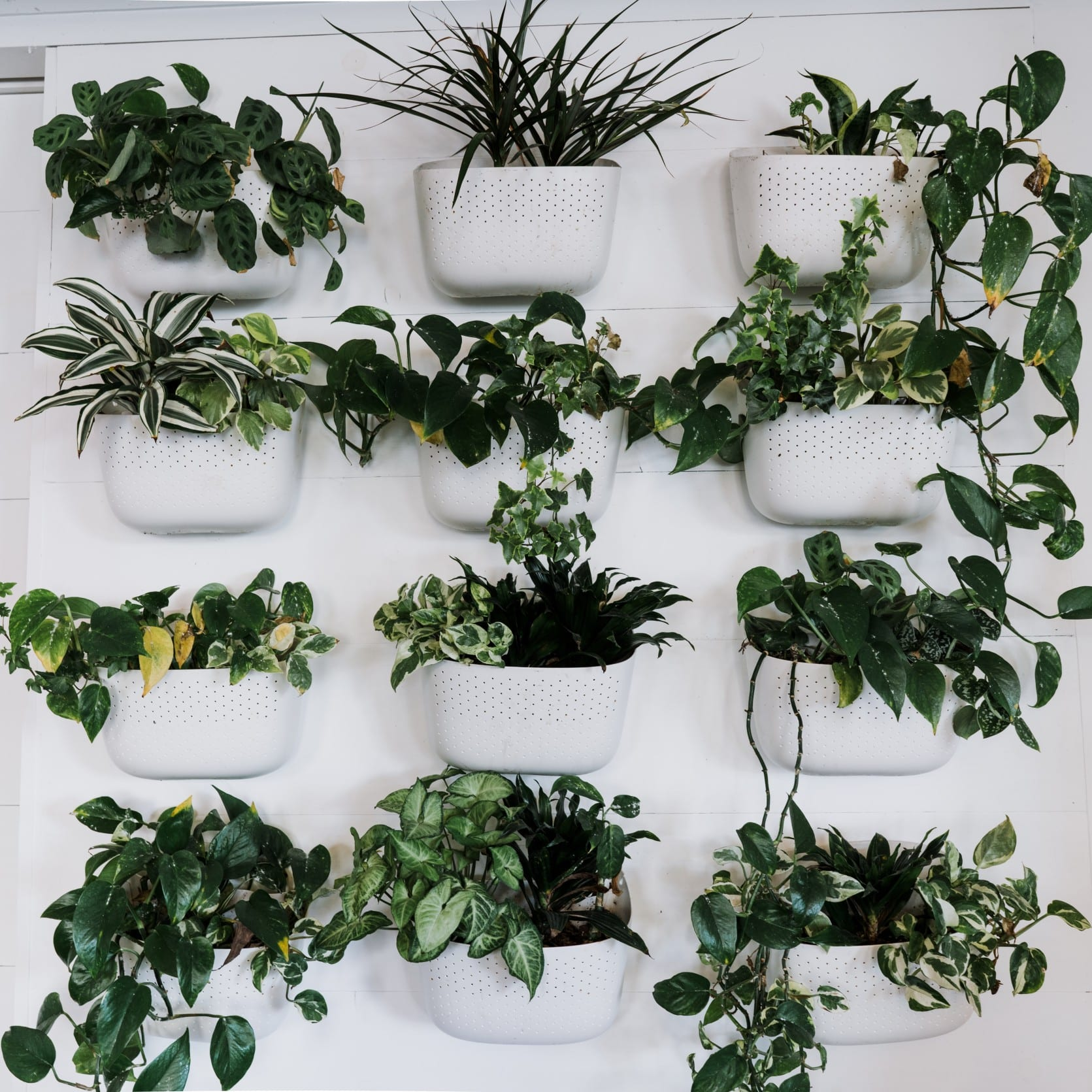 Lush Plants Hanging